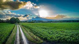 Wärmenutzung aus Biogasanlagen – ein Interview