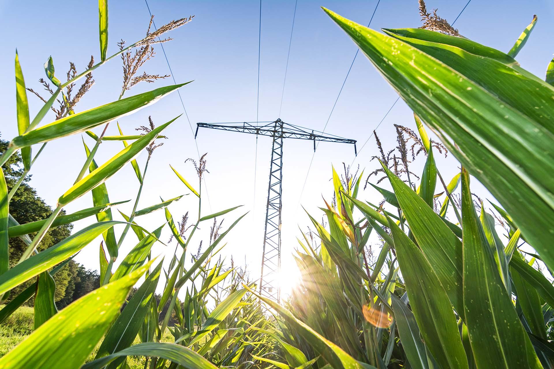 EEG 2021 – Auswirkungen auf die Biogasbranche und das KWK-Gesetz